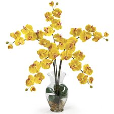 Liquid Illusion Phalaenopsis Silk Orchid Arrangement in Yellow