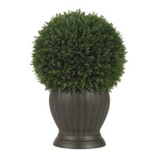 Cedar Ball Topiary in Decorative Vase