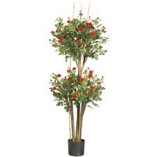 Mini Rose Round Topiary in Pot