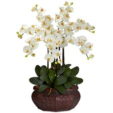 Large Phalaenopsis Silk Flower Arrangement in Cream