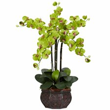 Phalaenopsis with Decorative Vase Silk Flower Arrangement in Green