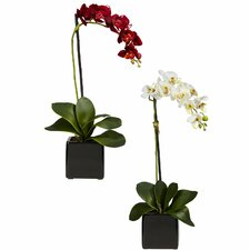 Phaleanopsis Orchid with Black Vase Silk Arrangement (Set of 2)