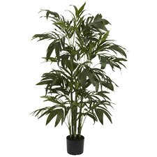 Bamboo Palm Tree in Pot