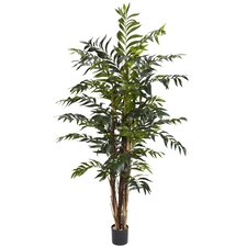 5' Bamboo Palm Silk Tree