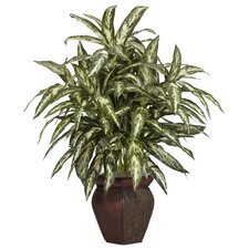 Aglonema Desk Top Plant in Decorative Vase