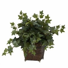Puff Ivy Desk Top Plant in Planter