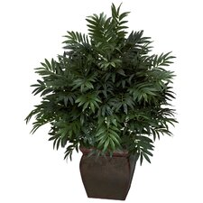 Triple Bamboo Palm Floor Plant in Planter