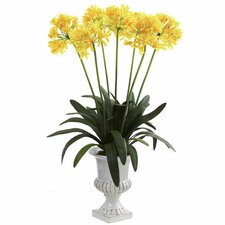 African Lily with Urn