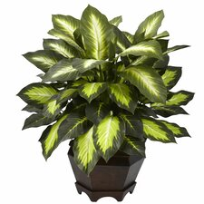 Nearly Natural Triple Golden Dieffenbachia Desk Top Plant in Decorative Vase