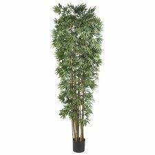 Bamboo Japonica Silk Tree