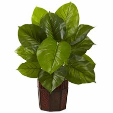 Large Leaf Philodendron with Decorative Planter