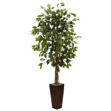 Ficus Tree with Bamboo Planter