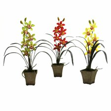 Cymbidium Orchid with Vase (Set of 3)