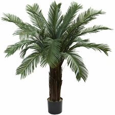 Cycas Paml Tree in Pot