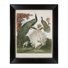 Peacock Gathering Framed Painting Print