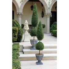 Classic Topiary in Urn
