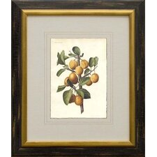 <strong>Phoenix Galleries</strong> Plums Framed Print