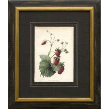 <strong>Phoenix Galleries</strong> Strawberries Framed Print