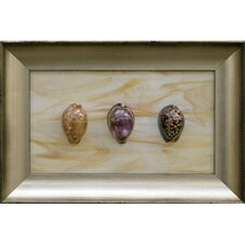 <strong>Phoenix Galleries</strong> Three Cowries Shadow Box