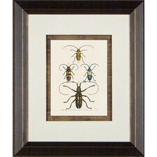 <strong>Phoenix Galleries</strong> Beetle 2 Framed Print