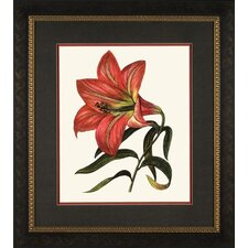 <strong>Phoenix Galleries</strong> Red Lily 2 Framed Print