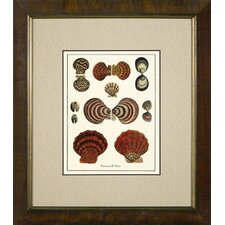 Varieties of Bi - Valve Framed Print