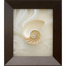 <strong>Phoenix Galleries</strong> Large Nautilus - Inside Half