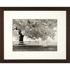 <strong>Phoenix Galleries</strong> Autumn Morning Framed Print