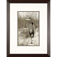 Heron at Rest Framed Print