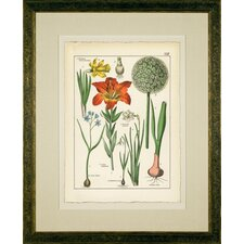 "<strong>Phoenix Galleries</strong> Narcissus Framed Print - 34""x 42"""