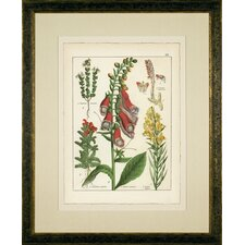 <strong>Phoenix Galleries</strong> Foxglove Framed Print