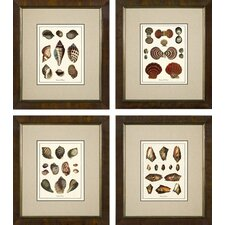 <strong>Phoenix Galleries</strong> Varieties of Tonna Framed Prints