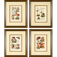 <strong>Phoenix Galleries</strong> Antique Mushrooms Framed Prints