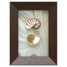 Chambered Nautilus Shadow Box