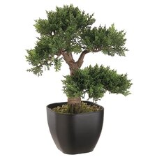 <strong>Tori Home</strong> Cedar Bonsai Desk Top Plant in Planter