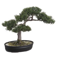 <strong>Tori Home</strong> Re-Shippable Box Cedar Bonsai Desk Top Plant in Planter