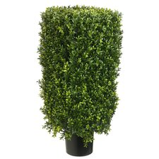 "30"" Rectangle Boxwood Topiary Plant with Plastic Pot"