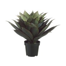 "28"" Agave Plant with 51 Leaves in Plastic Pot"
