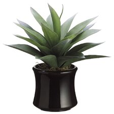 Agave in Brown Pot