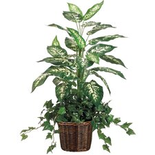 Dieffenbachia and Ivy Floor Plant in Pot