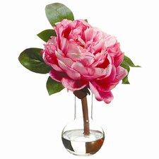 Peony in Glass Vase