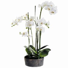 Faux Phalaenopsis Orchid Plant in Clay Pot