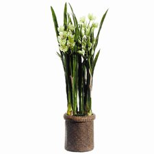 Faux Cymbidium Orchid Plant in Basket