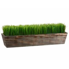 Grass in Wood Planter