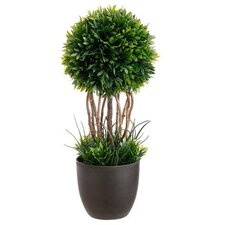 Tea Leaf Round Tapered Topiary in Pot