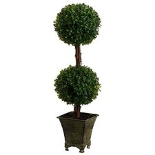 Boxwood Double Ball Square Tapered Topiary in Pot