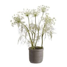 Queen Anne's Lace in Cement Pot