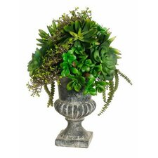 Succulents Floor Plant in Urn