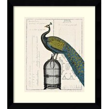 Peacock Birdcage II Framed Print By Sue Schlabach