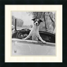 Fox Terrier in Convertible 1953 Framed Print
